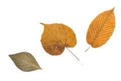 Желтые оранжевые изолированные листья зеленого цвета Стоковая Фотография