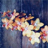Желтые орхидеи Стоковое Фото