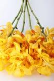 Желтые орхидеи Стоковое фото RF
