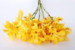 Желтые орхидеи Стоковое Изображение