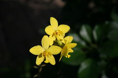 Желтые орхидеи /Tropical орхидей стоковые изображения rf