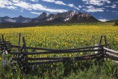 Желтые ослы около поля, западной загородки и гор Сан-Хуана, мезы Hastings, около последнего ранчо доллара, Ridgway, Колорадо, США Стоковое фото RF