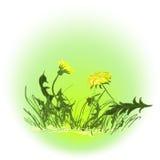Желтые одуванчики Стоковое Изображение