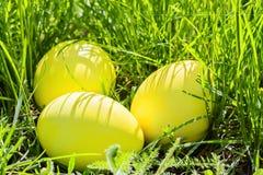 Желтые пасхальные яйца в зеленой траве, крупном плане Стоковые Изображения RF