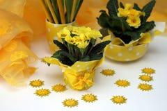 Желтые первоцветы Стоковые Изображения