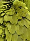 Желтые пер ары Стоковое Изображение RF