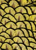 Желтые пер павлина Стоковые Фотографии RF