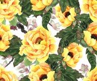 Желтые пионы на белизне Стоковые Изображения RF