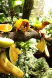 Желтые попугаи Стоковые Фотографии RF