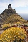 Желтые полевые цветки и башня на Capraia Эльбе, Тоскане, Италия, Стоковые Фото