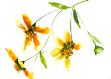 Желтые полевые цветки, иллюстратор акварели Стоковое Изображение