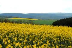 Желтые поля Стоковая Фотография RF