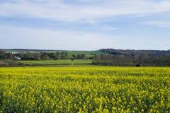 Желтые поля Стоковое Изображение RF