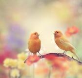 Желтые птицы в саде Стоковое фото RF