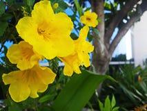 Желтые редкие полевые цветки Стоковые Изображения