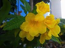 Желтые редкие полевые цветки Стоковое фото RF