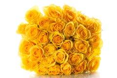 Желтые розы изолированные на белой предпосылке Стоковое Изображение RF