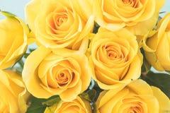 Желтые розы Стоковые Изображения RF