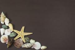 Желтые рыбы звезды и раковины моря Стоковые Изображения RF