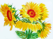 Желтые солнцецветы Стоковая Фотография RF