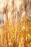 Желтые соломы Стоковые Изображения