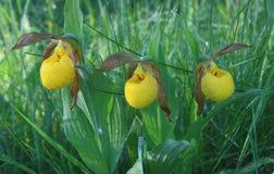 Желтые тапочки дамы Стоковые Изображения