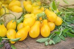 Желтые томаты груши Здоровые естественные натуральные продукты Стоковое Изображение