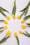 Желтые тюльпаны в круге на белой предпосылке Романтичная зацветая карточка для ` s дня рождения, годовщины, валентинки, ` s матер Стоковые Изображения