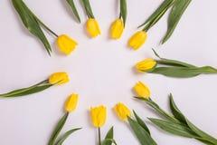 Желтые тюльпаны в круге на белой предпосылке Романтичная зацветая карточка для ` s дня рождения, годовщины, валентинки, ` s матер Стоковые Фото