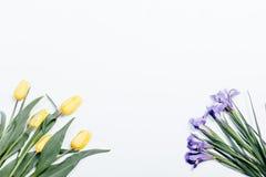 Желтые тюльпаны и фиолетовые радужки на белой предпосылке, взгляд сверху стоковое фото rf