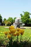 Желтые тюльпаны и фонтан в Hanau Стоковая Фотография RF