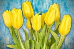 Желтые тюльпаны против голубой предпосылки Стоковая Фотография