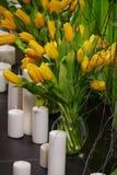 Желтые тюльпаны Стоковые Фотографии RF