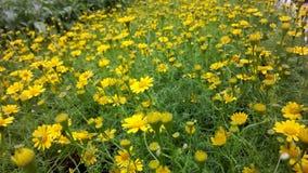 Желтые хранят folwers, который Стоковое Изображение RF
