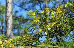 желтые цветеня Стоковое Изображение RF