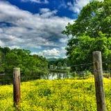 желтые цветеня Стоковое Фото
