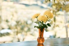Желтые цветки весны Стоковое Изображение RF