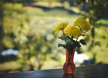 Желтые цветки весны Стоковое фото RF