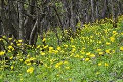Желтые цветки в лесе Стоковое Изображение RF