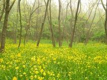 Желтые цветки в лесе Стоковые Фотографии RF