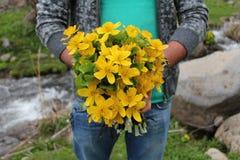 Желтые цветки в руке человека Стоковые Фотографии RF