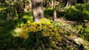 Желтые цветки в тени Стоковые Фотографии RF