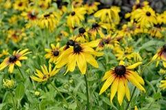 Желтые цветки в цветнике в лете Стоковое Фото