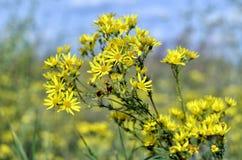 Желтые цветки в цветнике в лете Стоковые Изображения