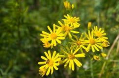 Желтые цветки леса Стоковое Изображение