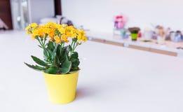 Желтые цветки засаженные в изолированных баках Стоковая Фотография
