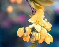 Желтые цветки - изображение запаса Стоковые Изображения