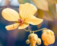 Желтые цветки - изображение запаса Стоковое Изображение