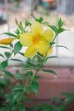 Желтые цветки и зеленый цвет Стоковые Изображения RF
