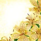 Желтые цветки лилии тигра - дизайн границы Стоковые Фото